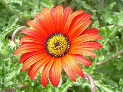 canvas print picture Fiore arancione