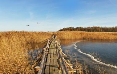 Boardwalk in a lake.