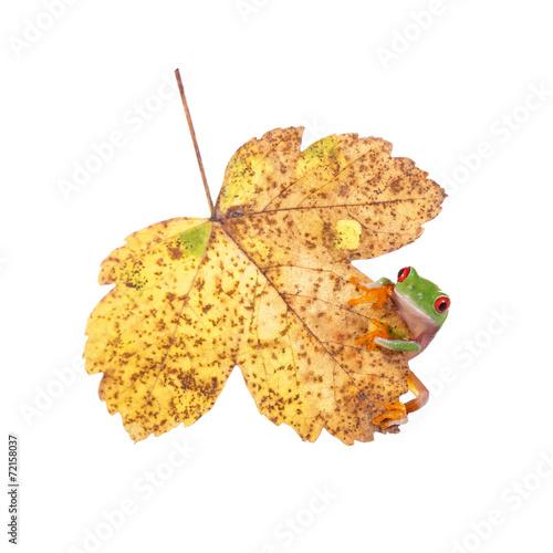 canvas print picture Herbstblatt mit Frosch