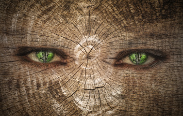 Eyes of Trees