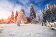 winter landscape trees in iniyi