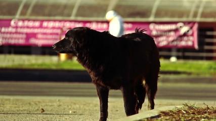 dog on the street, afraid of people