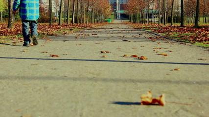 road autumn trees leaves people