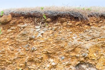 coupe de sol et de sous-sol, couverture végétale