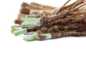 Fresh Dong Quai root on white background.