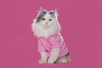 little kitty in a pink dress on a pink background