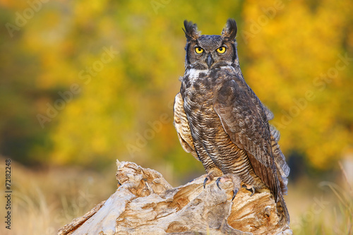 Deurstickers Uil Great horned owl sitting on a stump