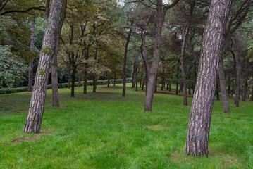 Woods landscape.