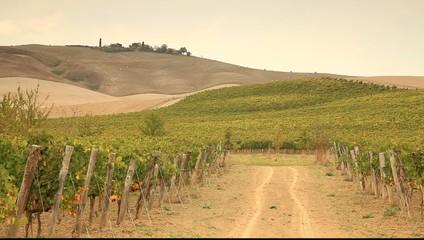 Tuscany vineyard during fall