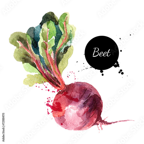 Beet. Hand drawn watercolor painting on white background. Vector - 72188470