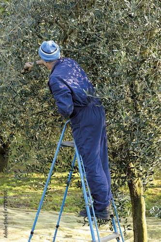 Tuinposter Olijfboom olivo
