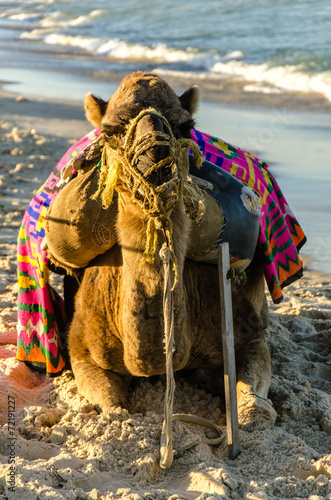 Fotobehang Tunesië Kamel bei Sonnenuntergang am Strand von Sousse