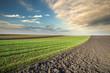 arable land field