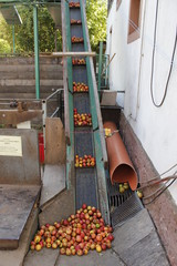 apple wine press