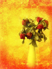 Red withered rose bouquet on grungy orange painted wall backgrou