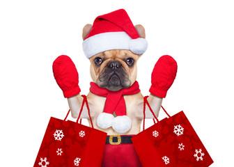 christmas dog shopping