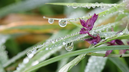dew drops on flower and grass macro
