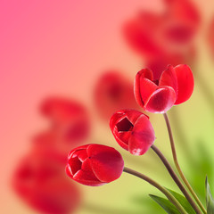 Bouquet of red tulips on blurred background. Romantic card with