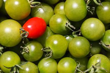 Tomaten-grün-02