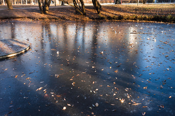 The first ice on the pond