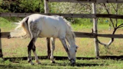 beautiful horse outdoors 8