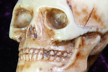 Portrait of an human skull in the foreground