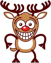 Funny Xmas reindeer feeling embarrassed