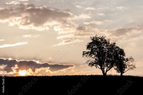 canvas print picture Bäume im Sonnenaufgang