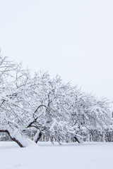 Garden and apple trees covered in snow