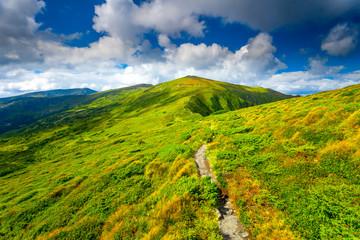 Carpatian summer landscape.
