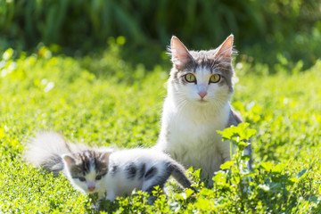 The cat is playing with a kitten on  green grass