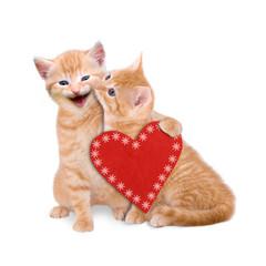 Zwei Katzen wünschen Frohe Weihnachten isoliert