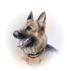 portrait of the german shepherd dog