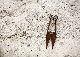 old rusty scissors on the wall
