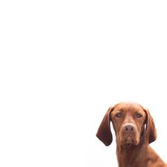 Hund blickt zur Seite