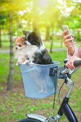bicycle walking with dogs