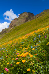 mount slope covered by a flowers