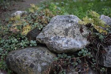 Stein mit ranken im Herbst