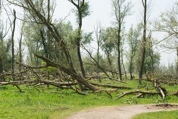 Bald eaten trees
