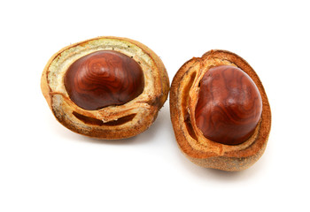 Shiny brown conkers in smooth cases