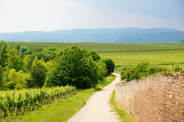 Weinlandschaft bei Herxheim