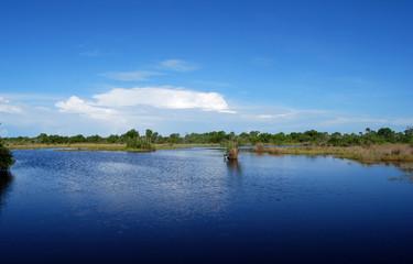 Everglades I