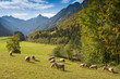 canvas print picture - Herde Schafe im Trettachtal mit Trettachspitze im Allgäu