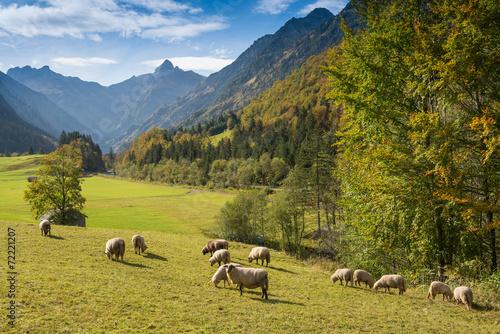 canvas print picture Herde Schafe im Trettachtal mit Trettachspitze im Allgäu