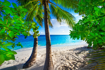 Rest in Paradise - Malediven - Palmen am Strand