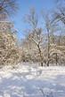 snowy winter forest