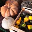 canvas print picture - various pumpkins