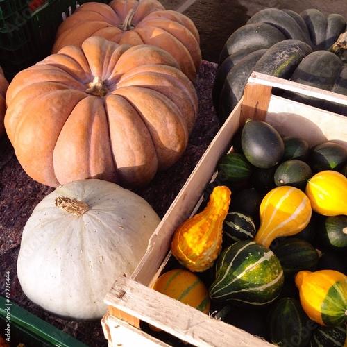 canvas print picture various pumpkins
