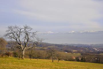 Campagne Suisse sur fond de lac Leman et Alpes