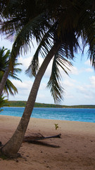 Palmera en Playa de Sun Bay, Puerto Rico